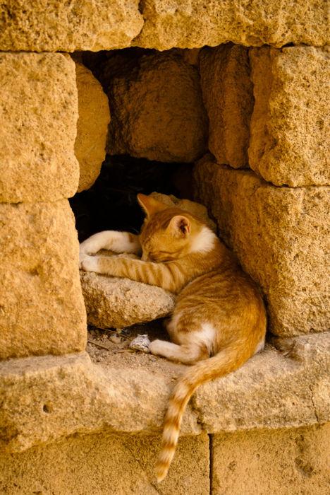 可愛い猫画像ブログ(977)
