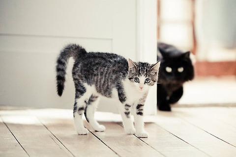 可愛い猫画像ブログ(1239)