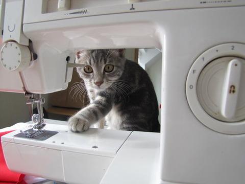 可愛い猫画像ブログ(1098)