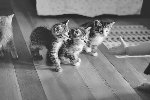 可愛い猫画像ブログ(1194)