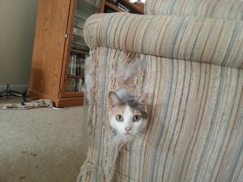 可愛い猫画像ブログ(1183)