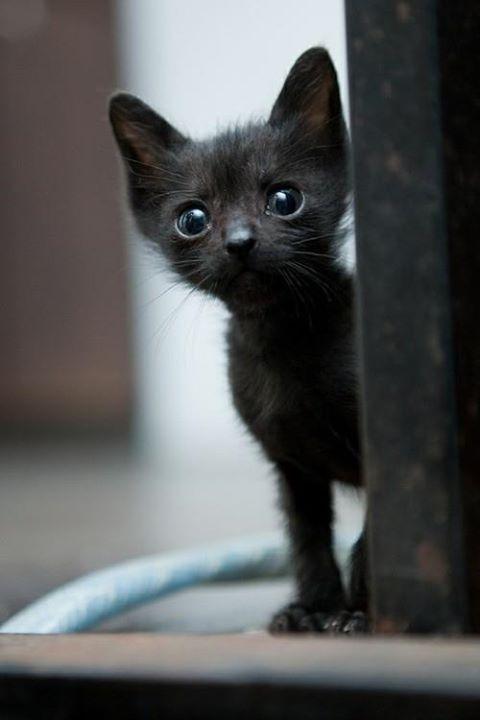 可愛い猫画像ブログ(1328)