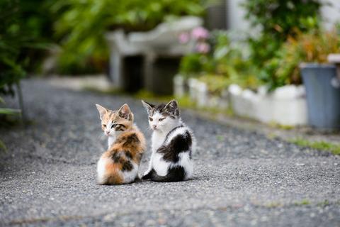 可愛い猫画像ブログ(924)