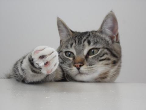 可愛い猫画像ブログ(1240)