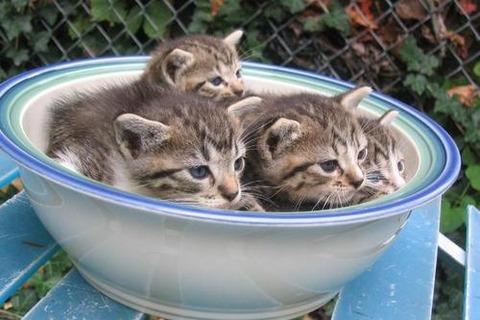 可愛い猫画像ブログ(1189)