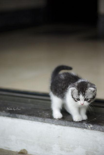 可愛い猫画像ブログ(1190)