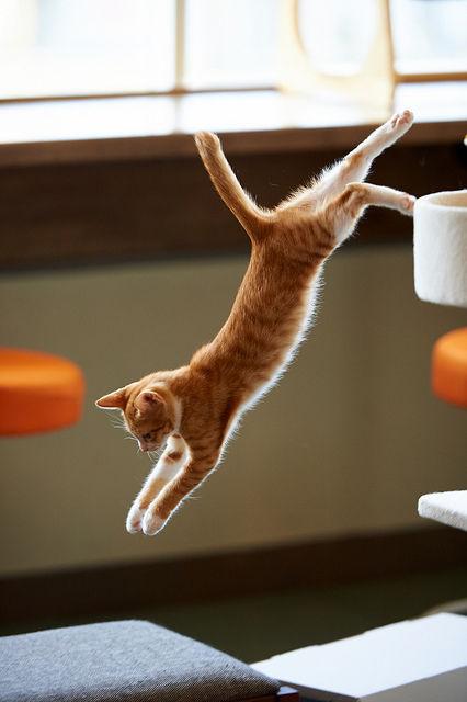 可愛い猫画像ブログ(1126)