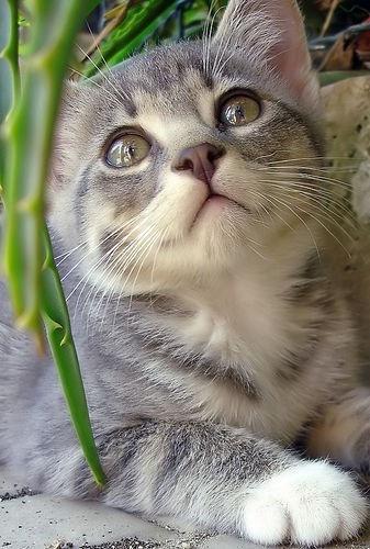 可愛い猫画像ブログ(776)