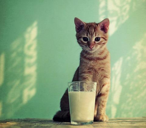 可愛い猫画像ブログ(1201)