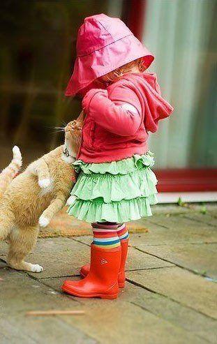 可愛い猫画像ブログ(1290)