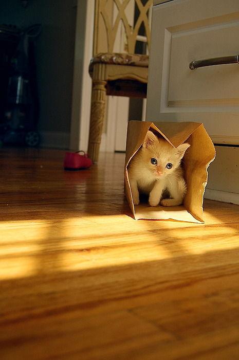 可愛い猫画像ブログ(1056)