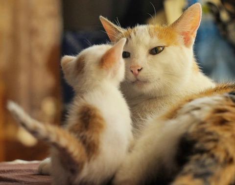 可愛い猫画像ブログ(1329)