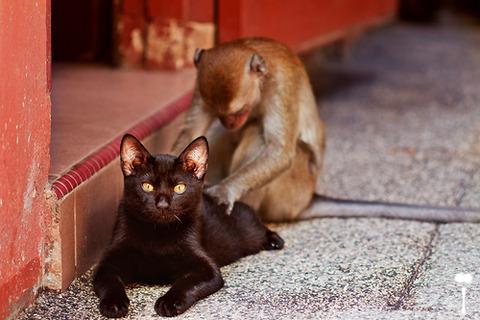 可愛い猫画像ブログ(998)