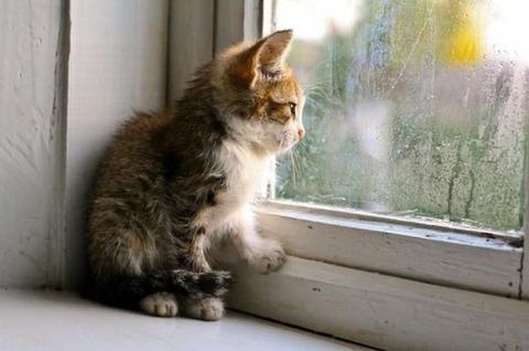 可愛い猫画像ブログ(761)