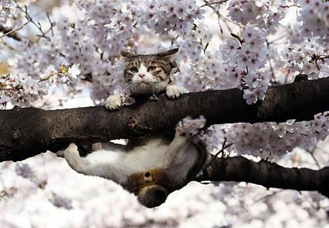 可愛い猫画像ブログ(1281)