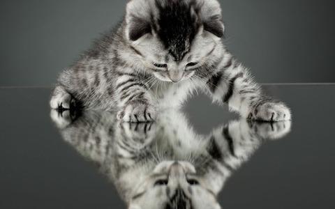 可愛い猫画像ブログ(1320)
