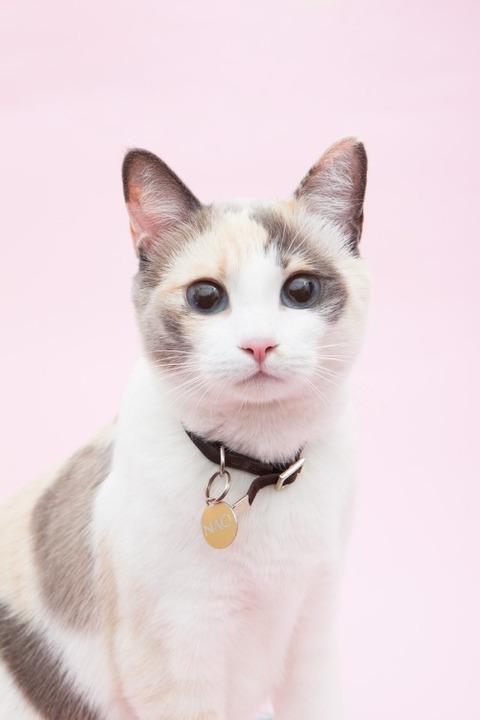 可愛い猫画像ブログ(1261)