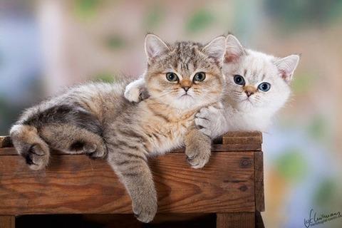 可愛い猫画像ブログ(774)