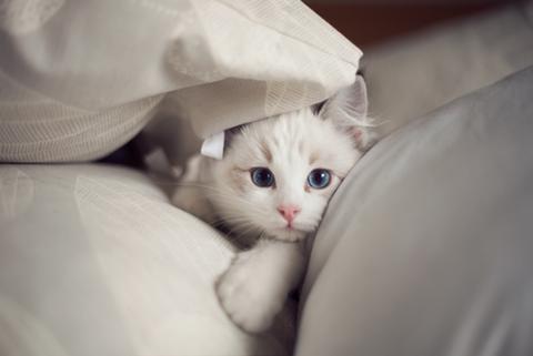 可愛い猫画像ブログ(1216)