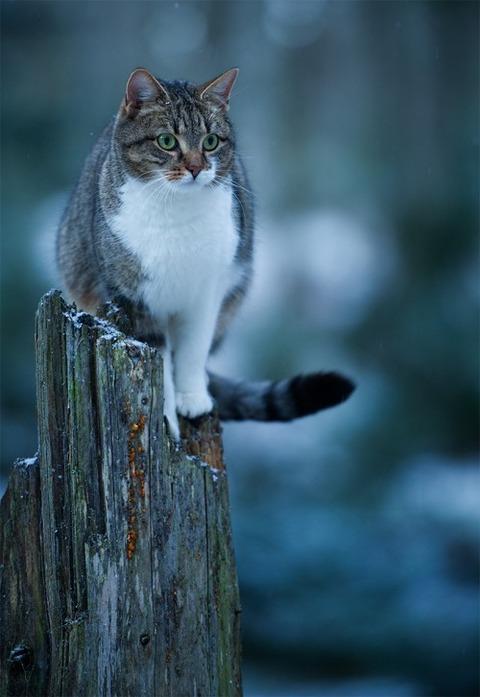 可愛い猫画像ブログ(1283)