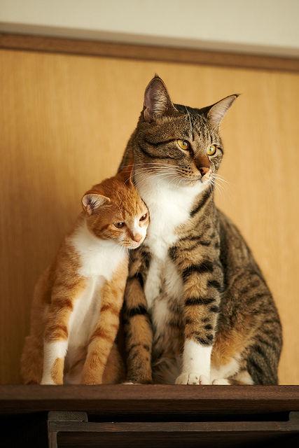 可愛い猫画像ブログ(1162)