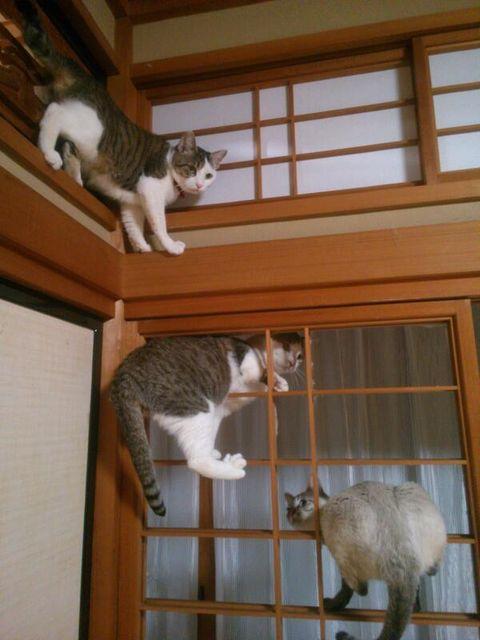 可愛い猫画像ブログ(1333)