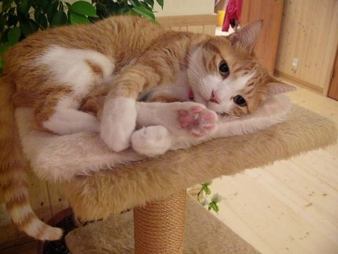 可愛い猫画像ブログ(1234)