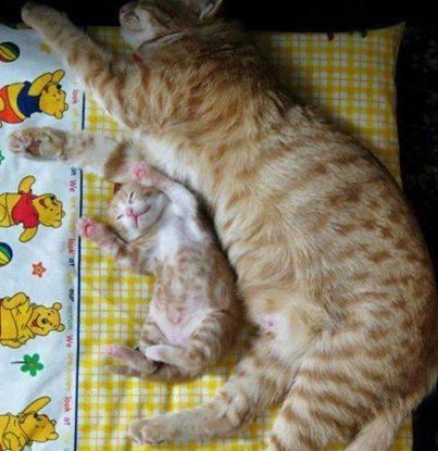 可愛い猫画像ブログ(1343)