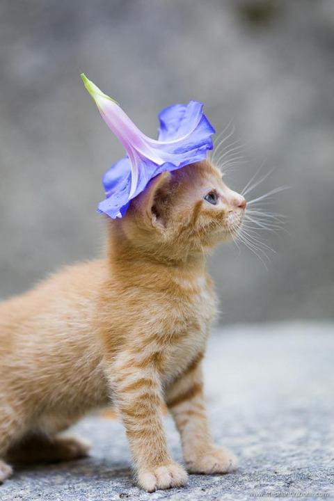 可愛い猫画像ブログ(1321)