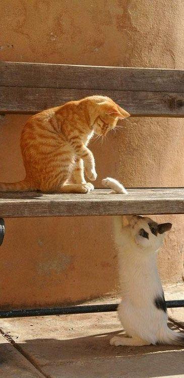 可愛い猫画像ブログ(1259)