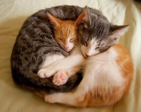 可愛い猫画像ブログ(1233)
