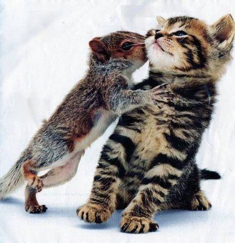 可愛い猫画像ブログ(751)