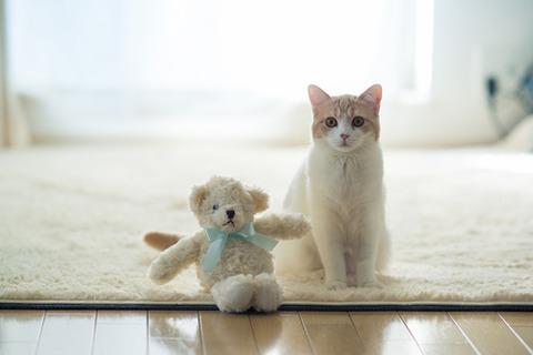 可愛い猫画像ブログ(1152)
