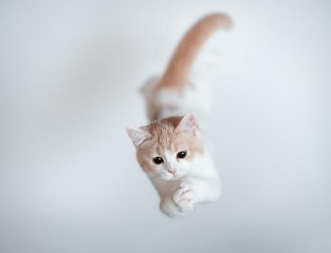 可愛い猫画像ブログ(1273)