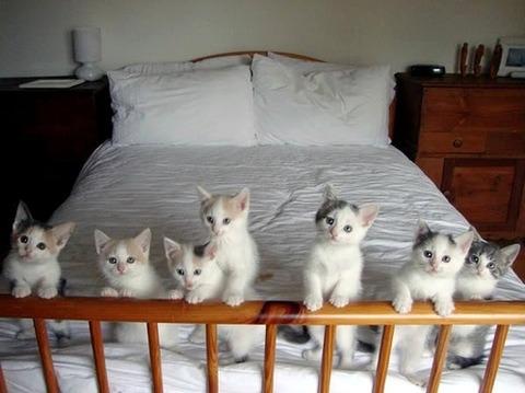 可愛い猫画像ブログ(786)