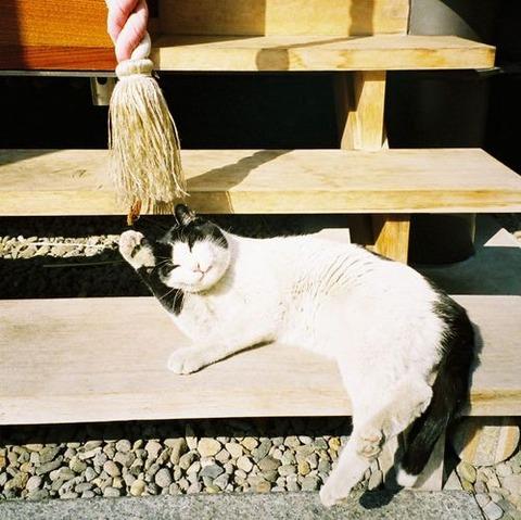 可愛い猫画像ブログ(1218)