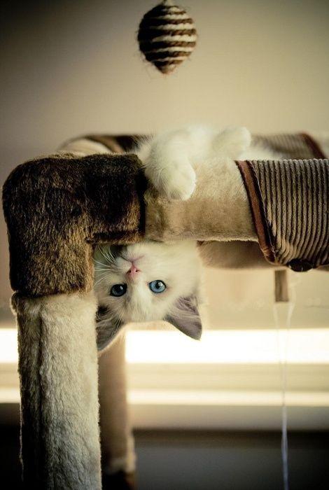 可愛い猫画像ブログ(1205)