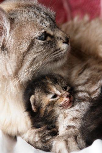可愛い猫画像ブログ(1198)