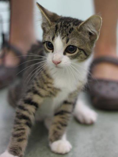 可愛い猫画像ブログ(1222)