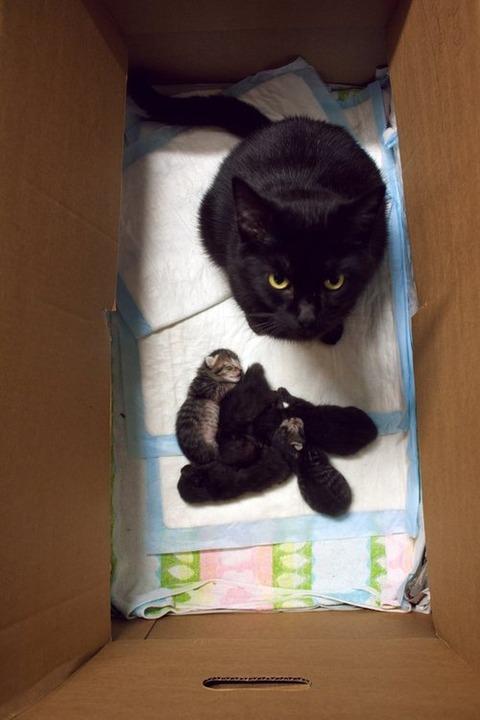可愛い猫画像ブログ(1155)