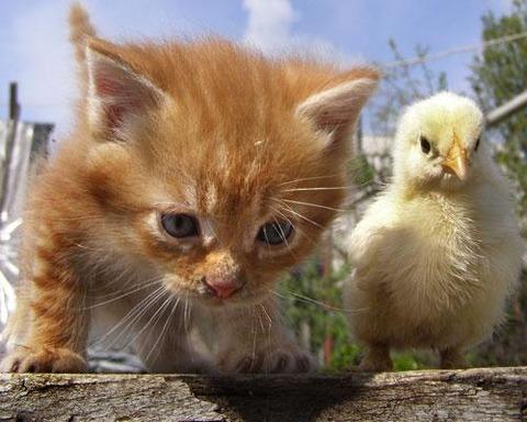 可愛い猫画像ブログ(1179)
