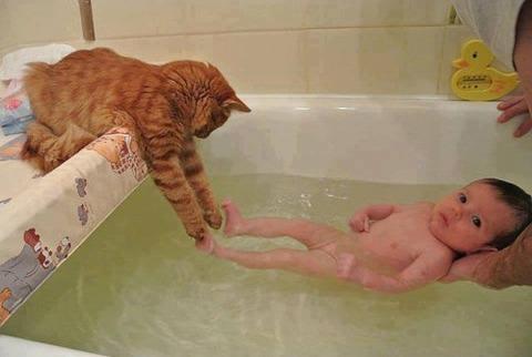 可愛い猫画像ブログ(1271)
