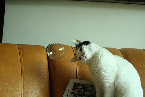 可愛い猫画像ブログ(1316)