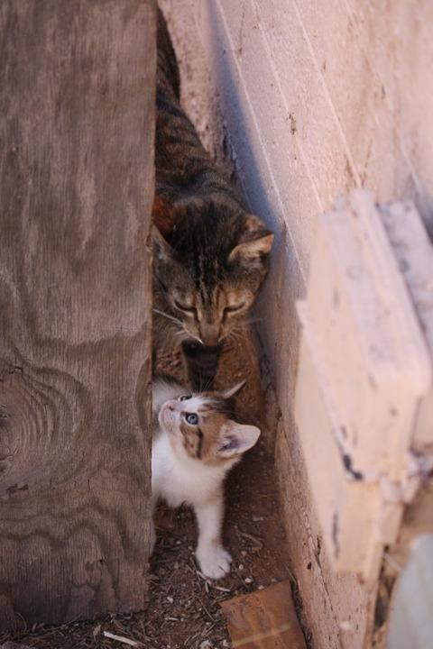 可愛い猫画像ブログ(1264)