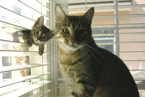 可愛い猫画像ブログ(1209)
