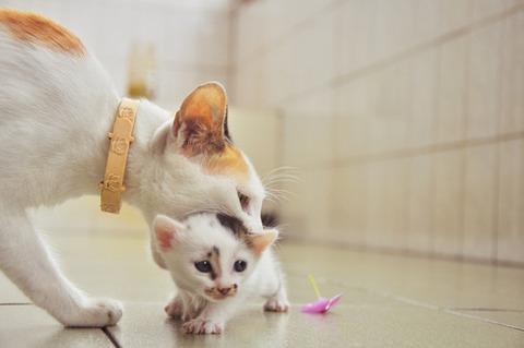 可愛い猫画像ブログ(1338)