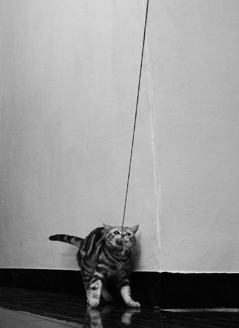 可愛い猫画像ブログ(1021)