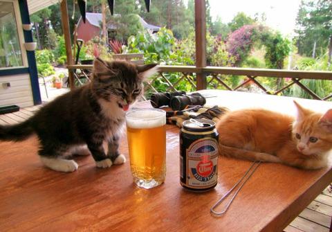 可愛い猫画像ブログ(1359)