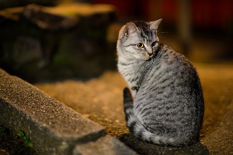 可愛い猫画像ブログ(1199)