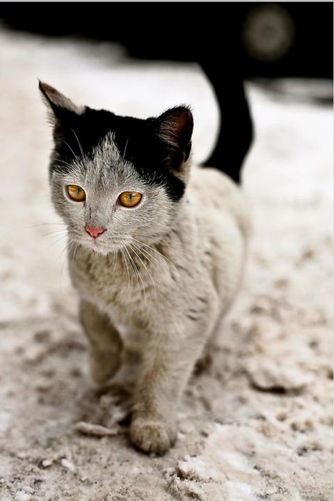 可愛い猫画像ブログ(1168)